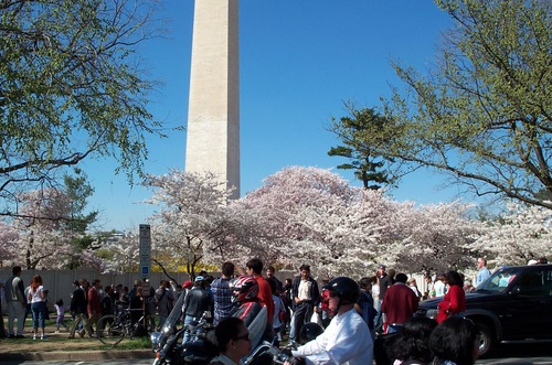 Dc_cherry_blossoms_405_004