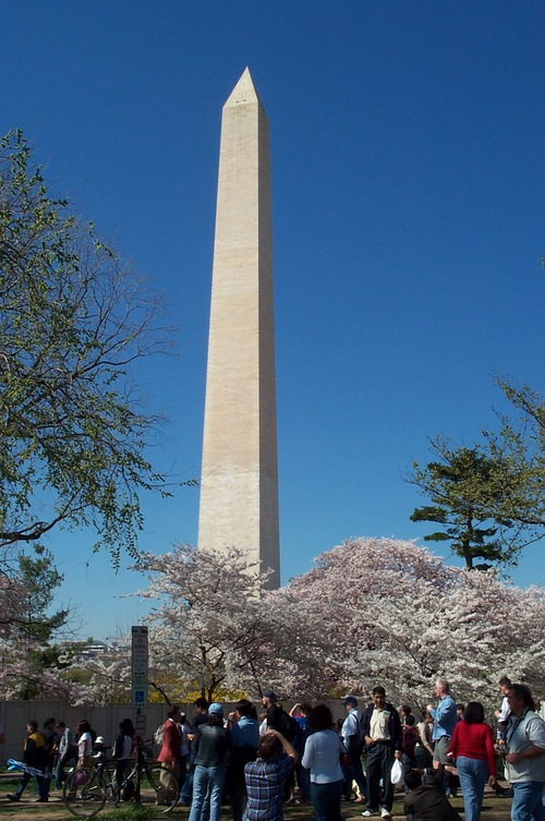 Dc_cherry_blossoms_405_005