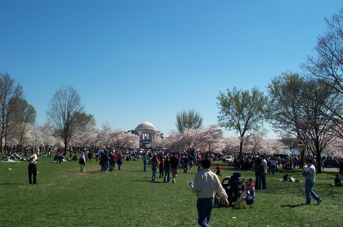 Dc_cherry_blossoms_405_007